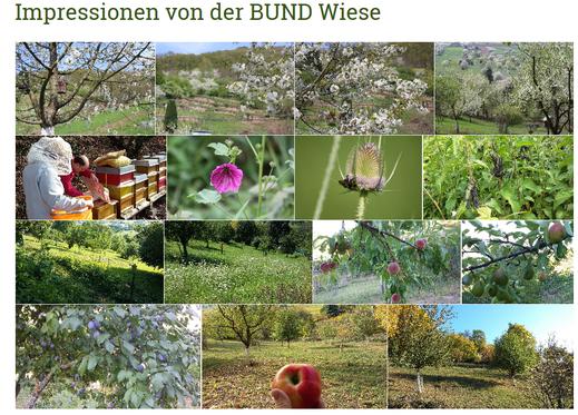 Bilder der BUND Streuobstwiese des Ortsverbands Dossenheim