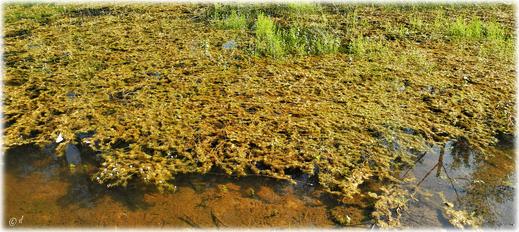 Dort, wo Wasser ist, sind Libellen nicht weit...