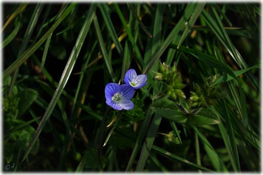 Feine kleine, aber auffallend schöne Blüten
