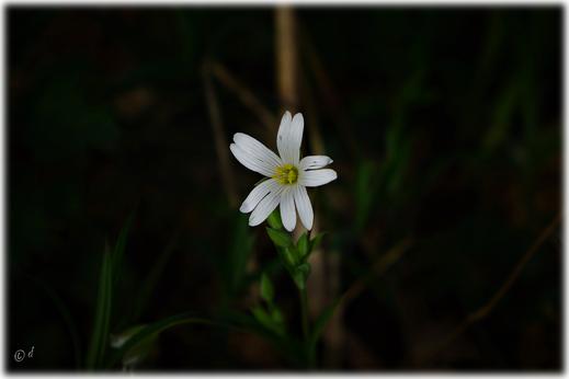 Die wunderschöne Zeichnung der Blüte