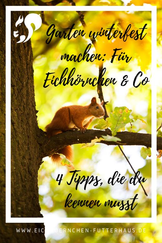 Eichhörnchen füttern_Garten winterfest_Eichhörnchen Futterhaus