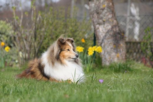Heaven, 12 Jahre alt und frischgebackene Hunde-Omi