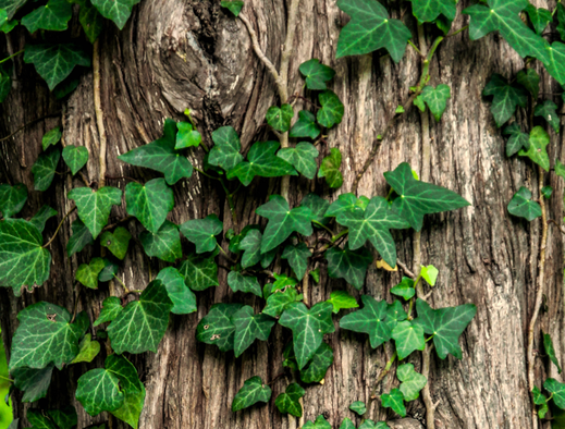 Bois - Élagage et abattage