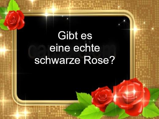 Dieses Bild zeigt einen kräftigen Goldrand. Er wird von wunderschönen roten Rosen verziert. Im Bild fragt ein Text: Gibt es eine echte schwarze Rose?