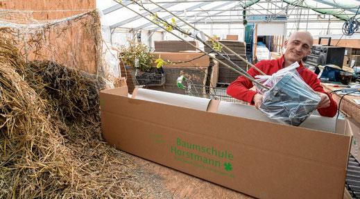 Verpackt die Pflanzen für die Endkunden: Przemek Bugaj. Täglich sind es mehr als 1000 Pakete. Michael Ruff