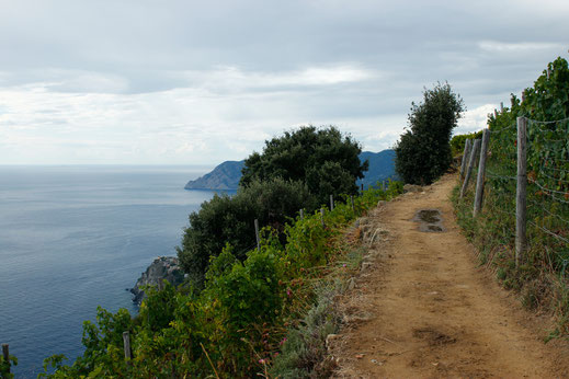 Hiking trail from Manarola to Corniglia, Cinque Terre, hiking in Italy