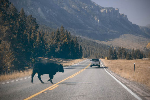 Wyoming, der Westen Amerikas, Cowboys