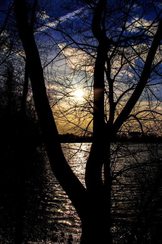 Sonnenuntergang am See mit Bäumen als Silhouette gratis downloaden