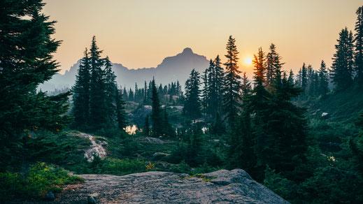 Wald im leichten Nebel bei Sonnenuntergang