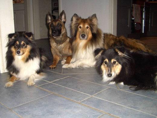 Josy, Indy, Ivy & Honey