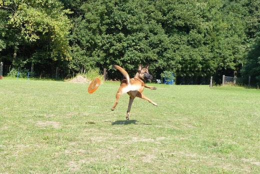 Indy & die Frisbee