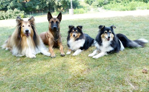 Ivy, Indy, Josy & Honey