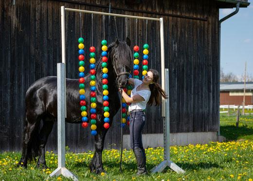 Bälletor, Bodenarbeit, Horsemanship, Gelassenheitstraining Hindernis, Agility Pferd, Knotenhalfter