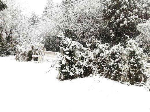 白銀の雪景色☆彡