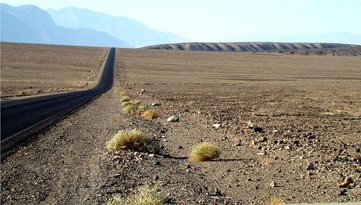Einsame Fahrt durch das Todestal bei grosser Hitze. Die Vegetation ist nur noch an wenigen Stellen in winzigem Umfang vorhanden.