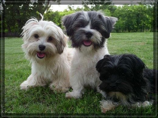 v. rechts nach links; Happy, Crisu, Bambam
