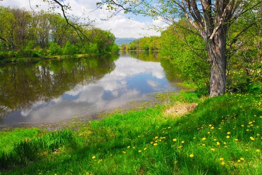 春真っ盛りの智恵文沼‐名寄市民の憩いの場所‐(北海道名寄市の智恵文沼)