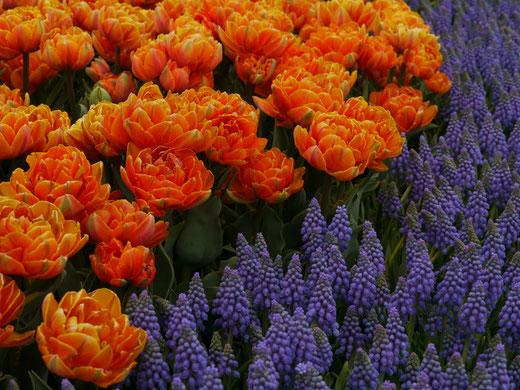 とっとり花回廊・春