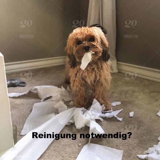Reinigung der Wohnung notwendig? Dann Blitzend-Blank Reinigungsservice Berlin anrufen!
