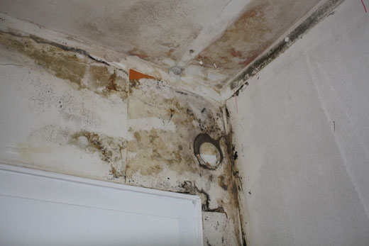 Typisches Erscheinungsbild einer mit Schimmelpilz befallenen Wand. Verdeckter Schimmelschaden hinter Venyl Tapete