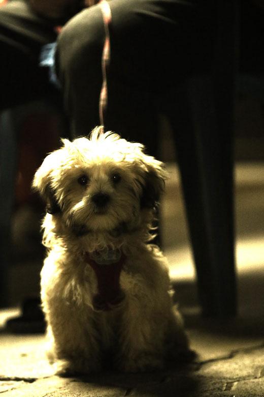 Hund aus Weiskirchen (2015)