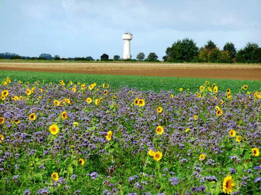 La terre de Forceville-en-Vimeu- Photo: Gégé d'Oisemont