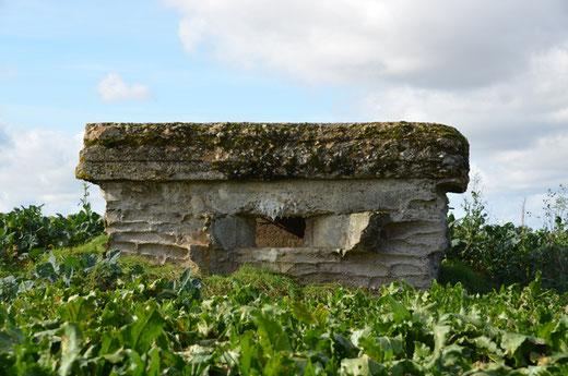 Le bunker d'Auchonvillers au milieu des betteraves du Santerre