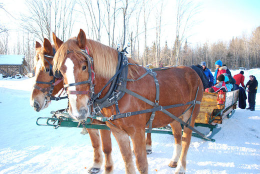 balade en traineau sleigh ride