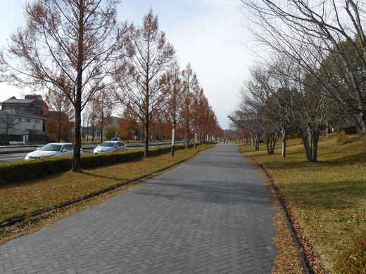 歩道が広いので余裕でトコトコ歩けます