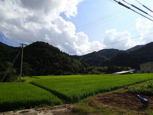 研修先周辺は、自然豊かな山間部です。