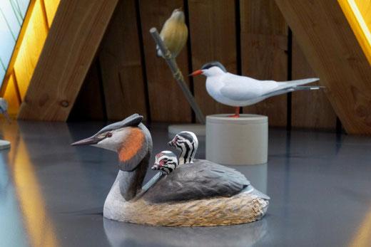 Grèbe huppé (Podiceps cristatus) et 2 jeunes sur le dos - Muséographie Biodiversum -Remerschen - sculpture taille x 1 - Dominique Rautureau