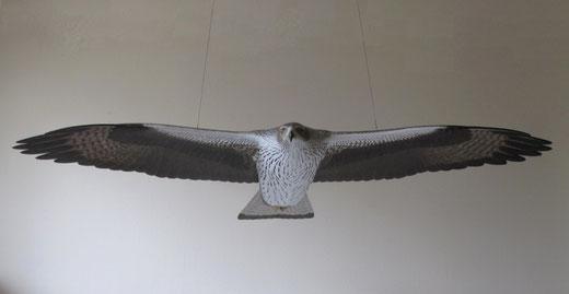 Aigle de Bonelli (Aquila fasciata - Bonelli's Eagle - Habichtsadler -Aguila-azor Perdicera) - x 1 - sculpture peinte - D.Rautureau - RTE Lyon-Jonage