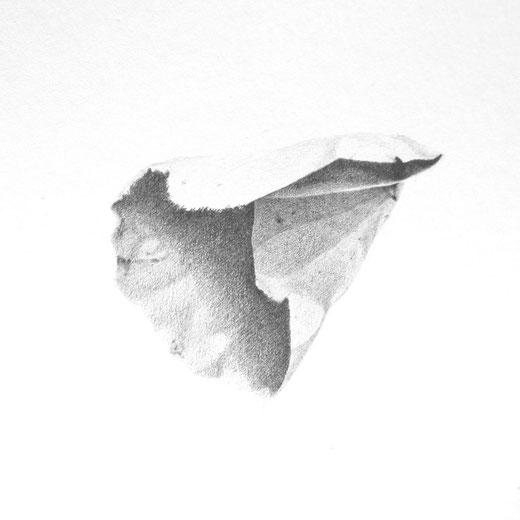 [ Colecciones] Grafito sobre papel. Detalle.