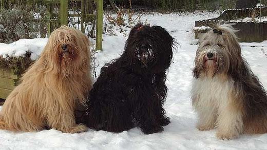 Das Trio im Schnee
