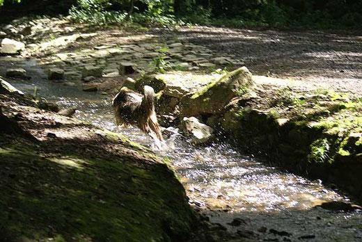 Milka, die Wasserratte