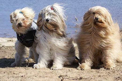 Indra, Milka und Bya-ra am Strand