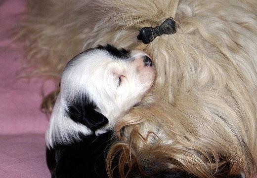 Rüde 1 - Schmusen mit Mama