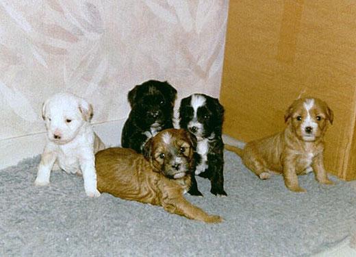 v.l.: Luna, Bya-ra, Bhayani, Bhodi und Lou