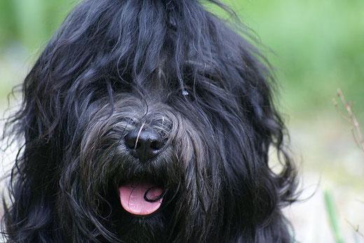 Srinagar Danda Fu-Yeshi Black Jewel - April 2016 - Ein glücklicher Hund. Immer zu Späßen aufgelelgt. nd
