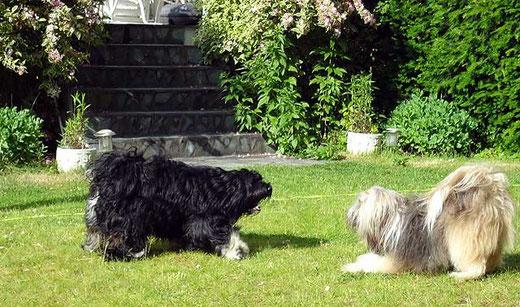 Bommel und Milka