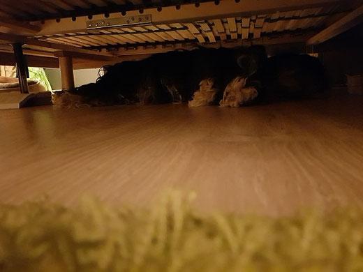 Lisha unterm Bett