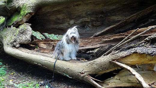 Milka und der alte Baum