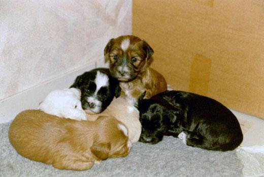 v,l.: Lou, Luna, Bhodi, Bya-ra und Bhayani