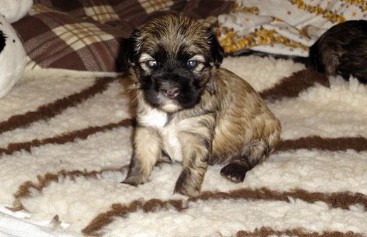 F-Wurf - Fiona - 3 Wochen alt