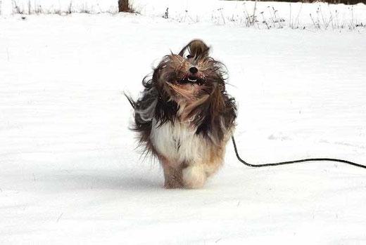 Milka hat Spaß im Schnee