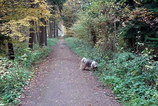 Milka im Wald auf der Pirsch