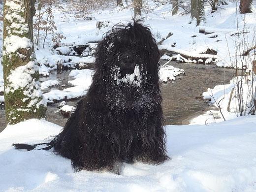 Yeshi im Winterwald im Januar 2016