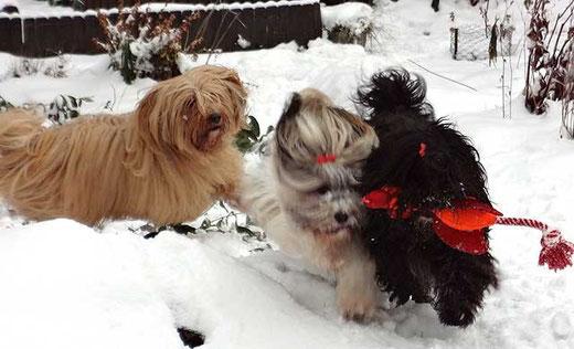 Das Trio beim Toben im Schnee