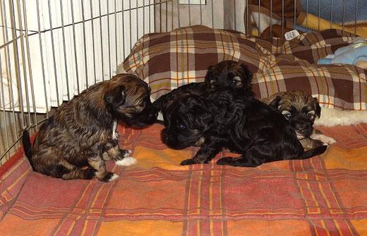 v.l.: Femi, Yeshi, Fiona und verdeckt Mon-sha