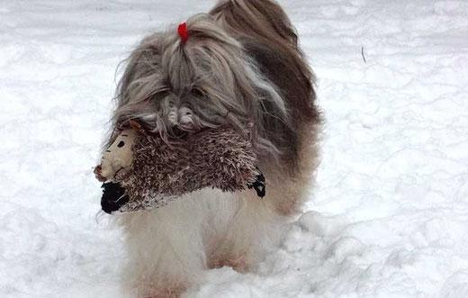 Wildschwein-Transport, heute tiefgekühlt